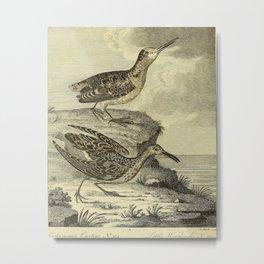 Vintage Illustration - Arctic Zoology (1785) - Eskimo Curlew; Little Woodcock Metal Print