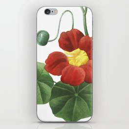 Indian cress art of Nature, flower print, botanical illustration iPhone Skin