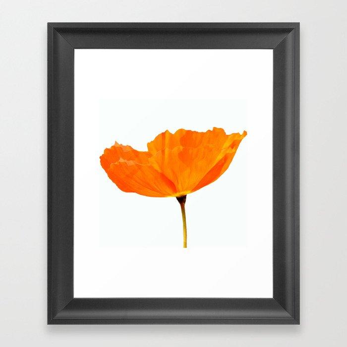 One And Only - Orange Poppy White Background #decor #society6#buyart Framed Art Print