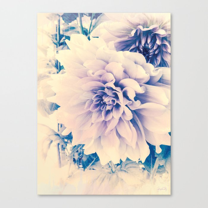 Delicate Beauty (Vintage Blue Lavender Dahlias) Canvas Print