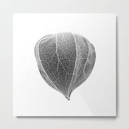 Chinese Lantern Pod - Mono Negative Macro Metal Print