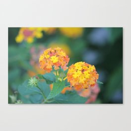 Pretty Sweet Floral Orange And Yellow Blossoms Canvas Print