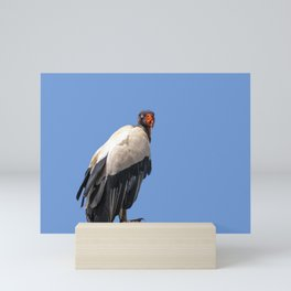 King Vulture Perched on a Branch Mini Art Print