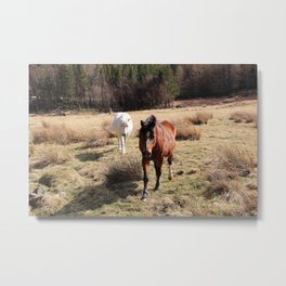 Two friendly horses Metal Print