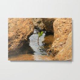 Sapling in the Ocean Metal Print