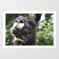 llama Art Prints featuring Llama by Veronica Ventress
