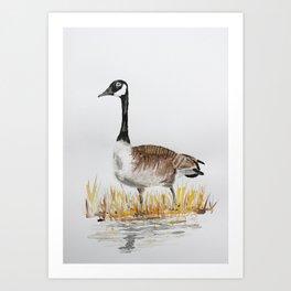 Bernache du Canada (Canada Goose) Art Print
