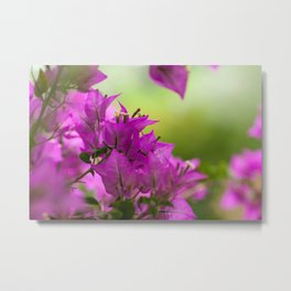 Beautiful  Brazilian flower 218  Metal Print