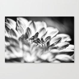 White Dahlia Macro Canvas Print