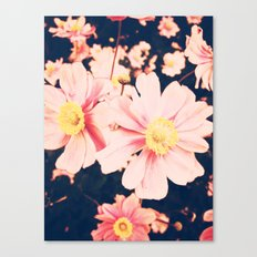 Pinks Canvas Print