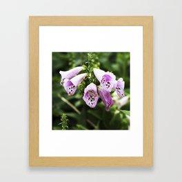 Pink Foxgloves - Adelaide Framed Art Print