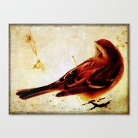 sparrow Canvas Prints featuring Sparrow by Christine Belanger