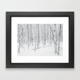 Swedish Birch Trees Framed Art Print