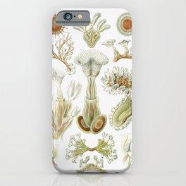 Ernst Haeckel iPhone Case
