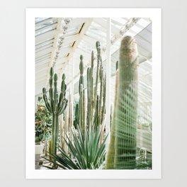 Hortus Botanicus | Botanical gardens of Dublin | Cactuses Cacti Art Print