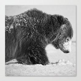 Alaskan Grizzly Bear in Snow, B & W - I Canvas Print