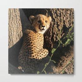 Cute little baby cheetah | Wildlife travel photography | Fluffy wall art Metal Print