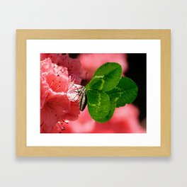 Lucky Butterfly Framed Art Print