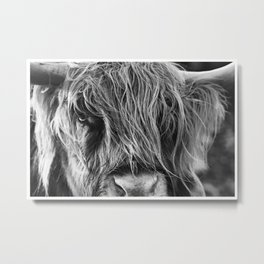 Highland cow print Metal Print
