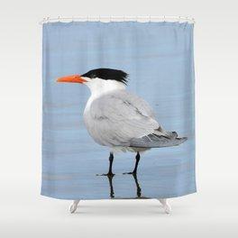 An Elegant Tern Shower Curtain