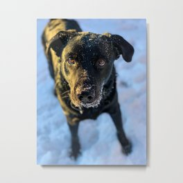 Black Lab in the Snow Metal Print