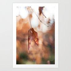 Late Autumn Light II Art Print