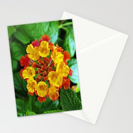 Manda la flor Stationery Cards
