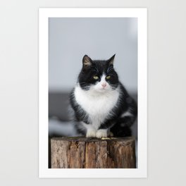 Black and white cat siting outdoor Art Print