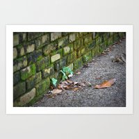 Moss covered wall Art Print