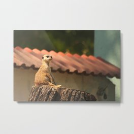 Meerkat Funny Observer #decor #society6 #buyart Metal Print