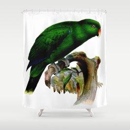 Eclectus Parrot Shower Curtain