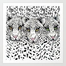 THREE SNOW LEOPARDS Art Print