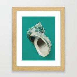 Sea snail shell Framed Art Print