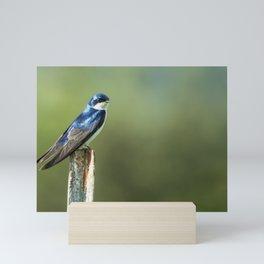 Tree Swallow Sitting on a Post Mini Art Print