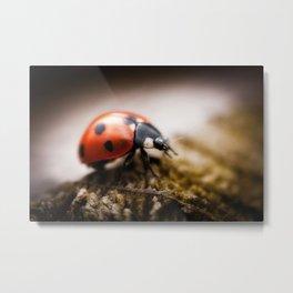 Ladybird Metal Print