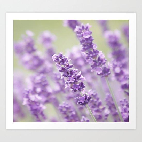 Lavender Dreams Art Print