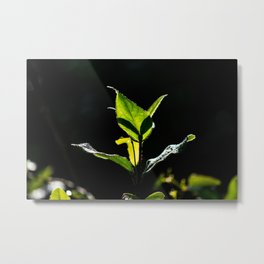 Green on black Metal Print