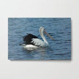 Aussie Pelican Metal Print
