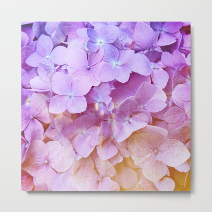 Multicolor beautiful Hydrangea petals - Flowers - Buds - Blossoms Metal Print