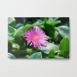 A flower hidden in the leaves Metal Print
