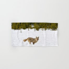 Coyote in Yellowstone, Coyote in Snow, Coyote in Winter, Wildlife in Snow, Wildlife in Yellowstone Hand & Bath Towel
