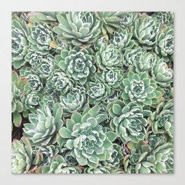 Succulent Bed Canvas Print