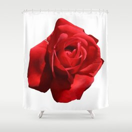 Red Rose Isolated Shower Curtain