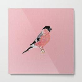 Siberian Bullfinch (rose palette) Metal Print
