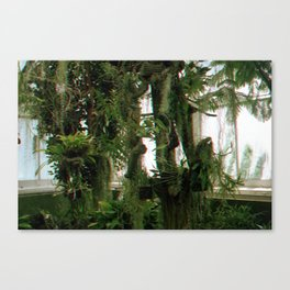 Green Haze Canvas Print