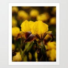 Yellow and Maroon Irisis Art Print