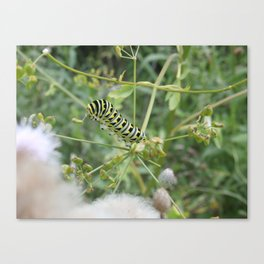 Withstand The Wind Canvas Print