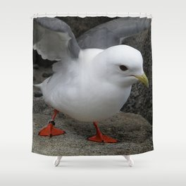 Red-Legged Kittiwake Shower Curtain