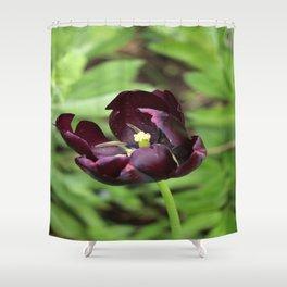 Crimson Red Tulip Shower Curtain