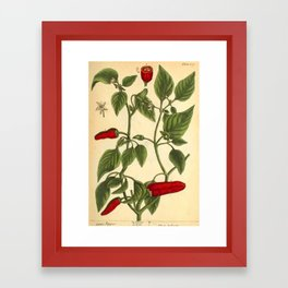 """Hot Pepper by Elizabeth Blackwell from """"A Curious Herbal,"""" 1737 (benefiting The Nature Conservancy) Framed Art Print"""